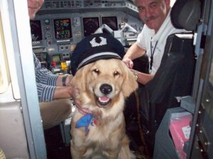 Ear Muffs For Dogs On Planes